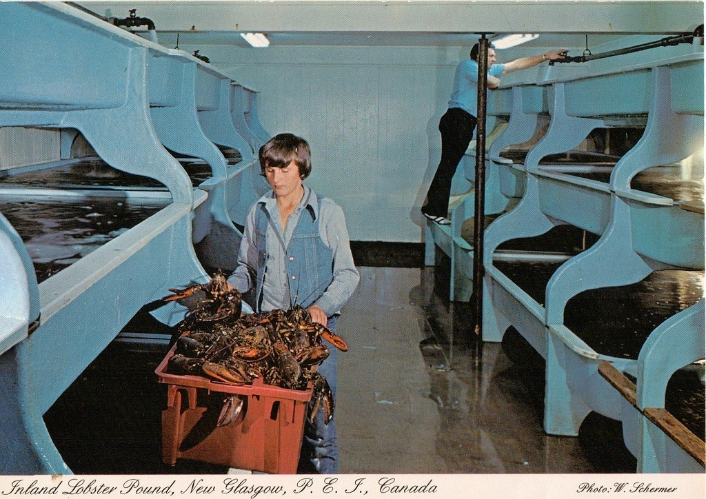 Lobster Pound 1975